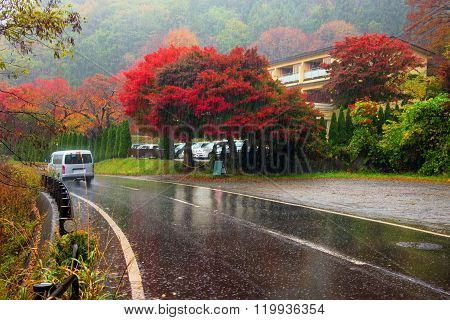 Heavy Rain With Autumn Leaves, Japan
