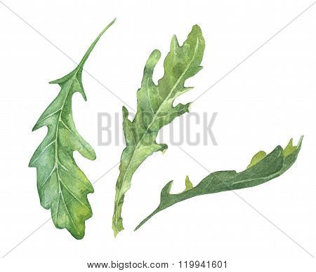 Watercolor rucola salad leaves