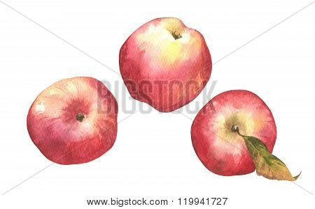 Watercolor hand-drawn illustration of fresh ripe peaches