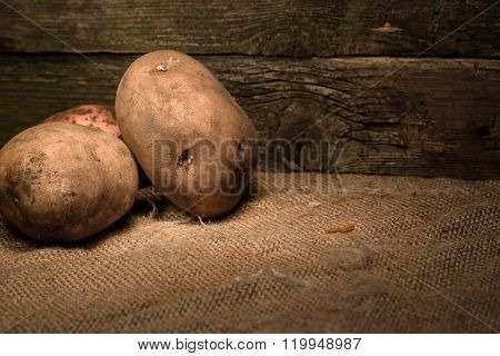 The Crude Potatoes In A Shed: On A Sacking At A Wall From Old Boards