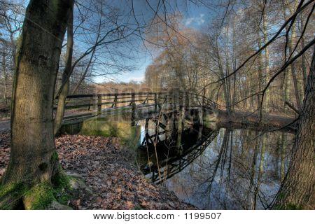 Frankfurt City Forest And Bridge