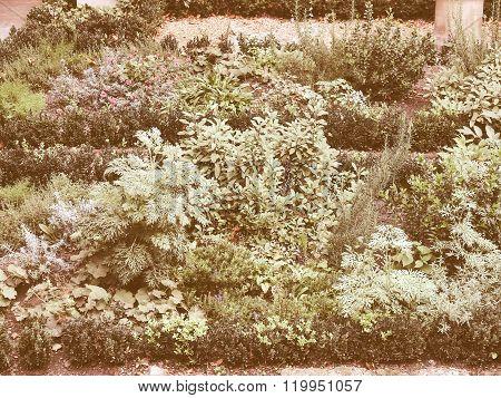Retro Looking Botanical Garden