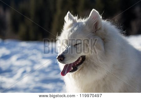 Dog is laughing