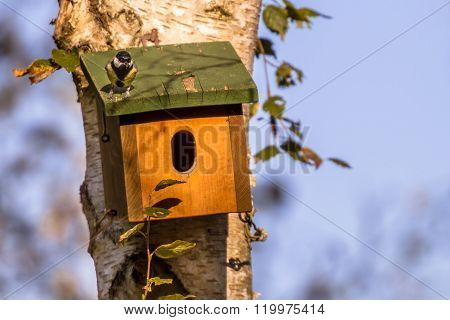 Nesting Box With Bird