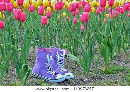 purple sneakers in tulip garden