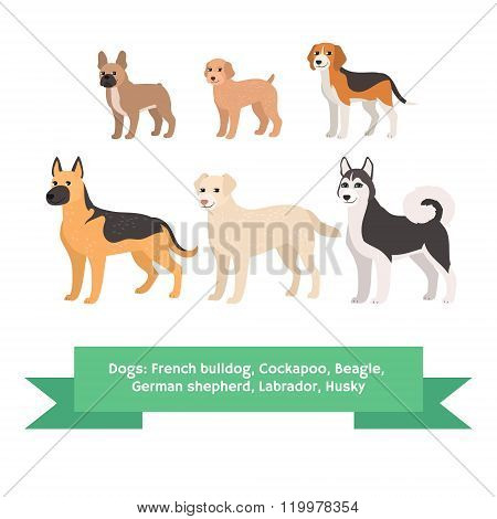 Dogs breed set with french bulldog cockapoo beagle german shepherd labrador husky. Isolated vector i