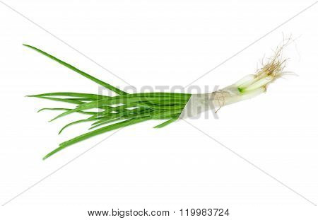 Bundle Of A Green Onion On A Light Background