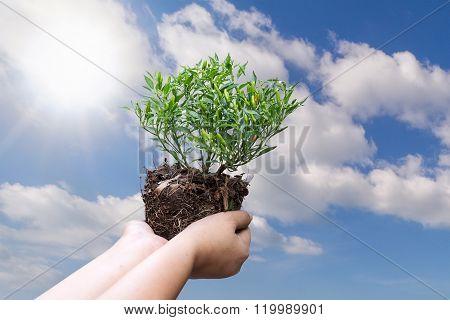 Human Hand Holding Plant With Soil