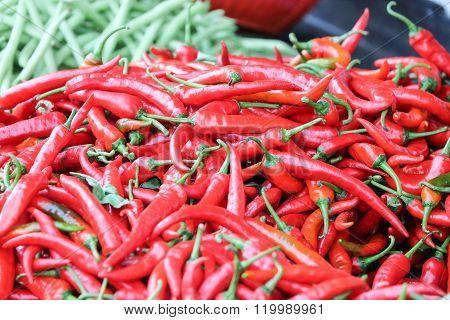 Birdseye Chili Pepper