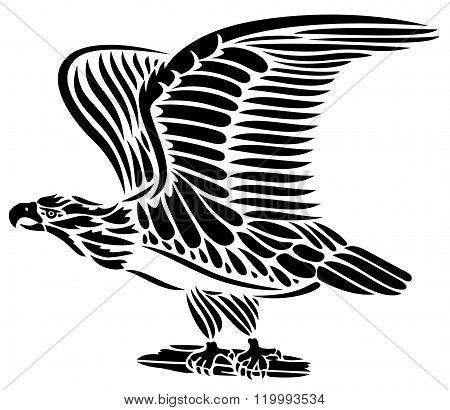 Eagle, wings