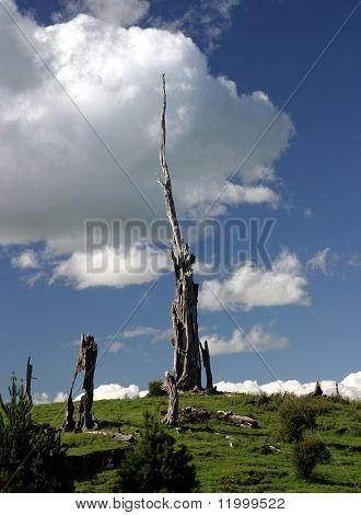 Petrified Tree Stumps, New Zealand
