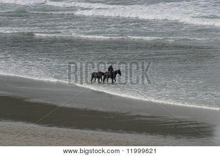 Horses and Rider on Dunedin Beach, New Zealand