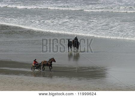Carriage Rider and Horses on Dunedin Beach, New Zealand