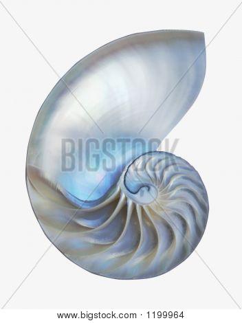 Inner Nautilus 2