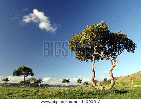 Trees, New Zealand