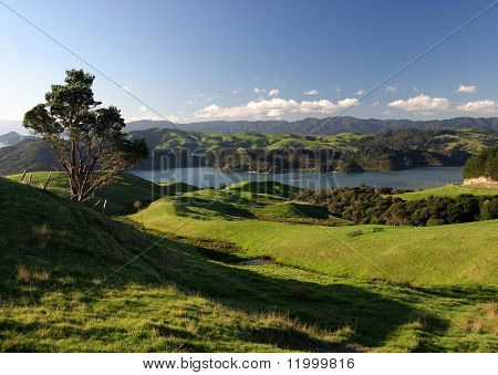 Balanceo de pastos verdes, Nueva Zelanda