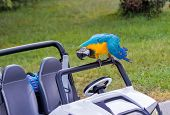 ������, ������: Parrot And Baby The Car On The Lawn