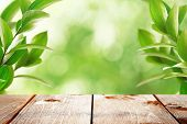 Spring or summer season abstract nature background with green leaves, grass and wooden floor poster