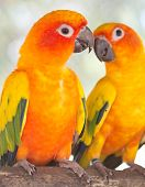 Постер, плакат: Pair Of Parrots