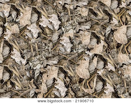 Dried leaves seamless background - texture pattern for continuous replicate.
