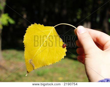 Leaf And Ladybug