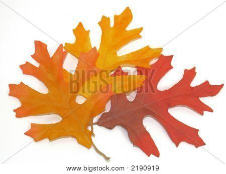 Eiche Herbstszenen