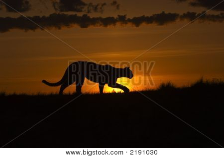 3051 Cougar