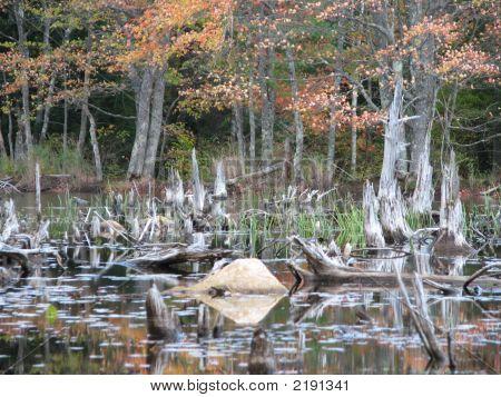 Fall Swamp