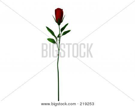 Langer Stiel Rose