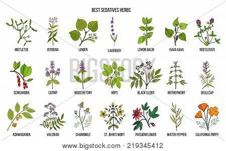 Best sedatives herbs