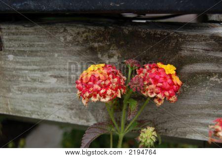 Flowers Next To Bench