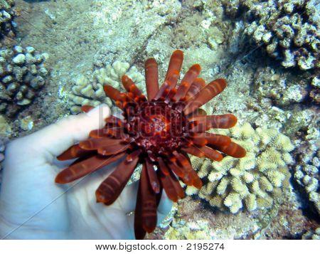 Underwater Animal