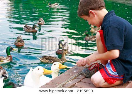 Boy Feeding Ducks