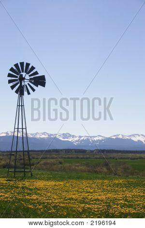Windmill Idaho Field