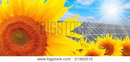 Solar energy panels on a sunflower field against sunny sky.