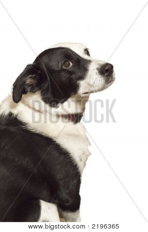 Dog Looking Longingly Up