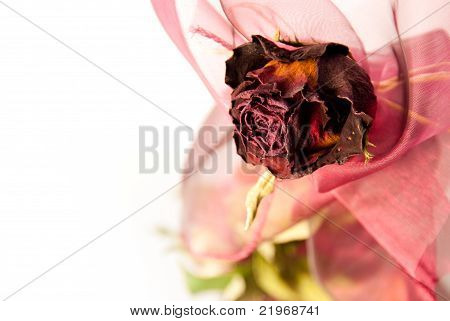 Beautiful Dry Red Rose Closeup
