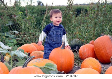 Pumpkin Playground