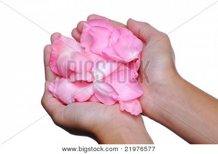 Woman's Hands Holding Pink Rose Petals isolated over white