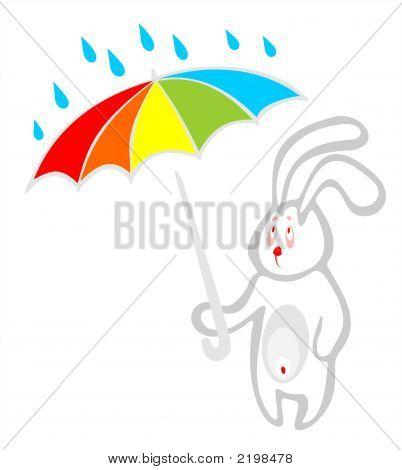 Rabbit And Umbrella