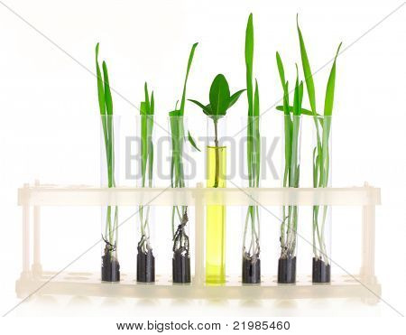 plants in a test tube isolated on white