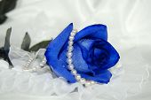 stock photo of blue rose  - Blue rose wrapped in a strand of pearls - JPG