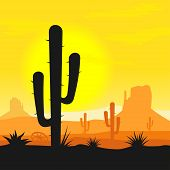 image of cactus  - Sunset in mexican desert with cactus plants silhouette - JPG