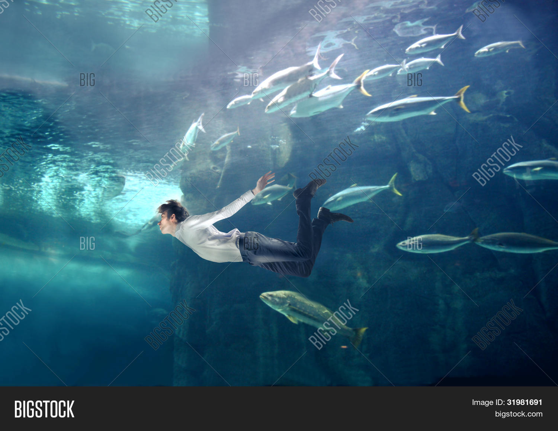 Fish in tank swimming -