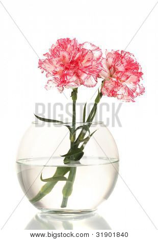 Beautiful carnations transparent vase isolated on white