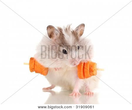 Cute hamster with carrot bar isolated white