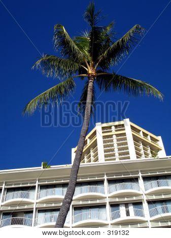 Edificio y palmera