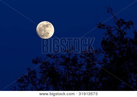 Lua cheia sobre floresta