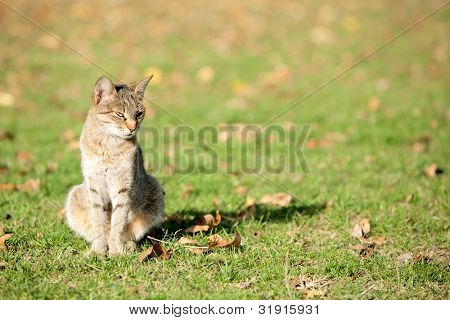 Haughty cat at sunny day at grass