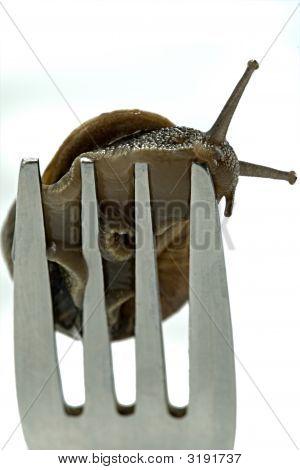 Snail Dinner